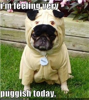 i'm feeling very  puggish today.