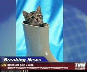 Breaking News - kitteh cot bein 2 cute awwwwwwwwwwwwwwwwwwwwwwwwwww