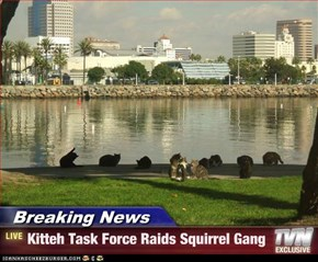 Breaking News - Kitteh Task Force Raids Squirrel Gang