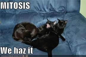 MITOSIS  We haz it