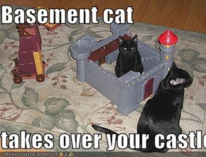 Basement cat  takes over your castle