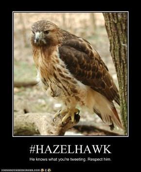 #HAZELHAWK