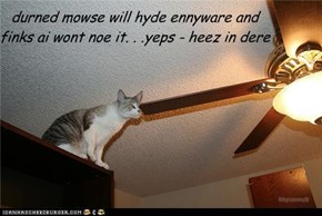 durned mowse will hyde ennyware and finks ai wont noe it. . .yeps - heez in dere