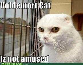 Voldemort Kitteh