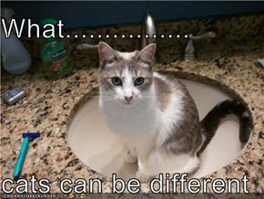 What................  cats can be different