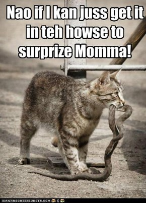 Beware of LOLcats bearing gifts.