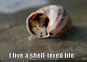 I live a shell-tered life