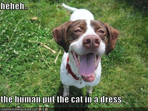 heheh..  the human put the cat in a dress