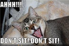 AHHH!!!  DON'T SIT! DON'T SIT!