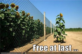 Free at last ...