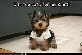 I'm too cute for my shirt!