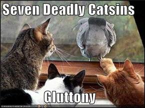 Seven Deadly Catsins  Gluttony