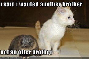 i said i wanted another brother  not an otter brother