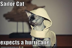 Sailor Cat  expects a hurricane