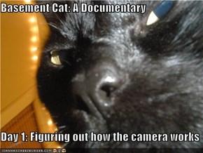 Basement Cat: