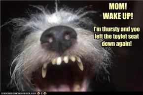 MOM!  WAKE UP!