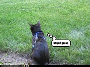 Stupid grass.