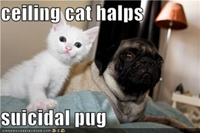 ceiling cat halps  suicidal pug
