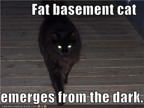 Fat basement cat  emerges from the dark.