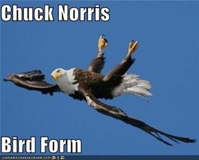 Chuck Norris  Bird Form