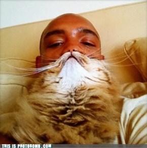 Mister Cat-Stache