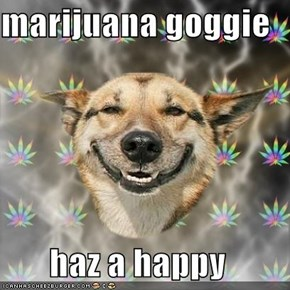 marijuana goggie  haz a happy
