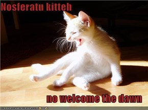 Nosferatu kitteh  no welcome the dawn