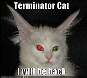 Terminator Cat  I will be back