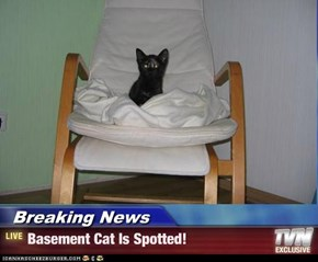 Breaking News - Basement Cat Is Spotted!