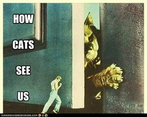 HOW  CATS  SEE  US