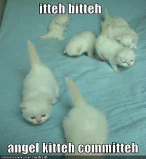 itteh bitteh     angel kitteh committeh