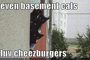 even basement cats  luv cheezburgers