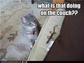 Lizard on the Couch