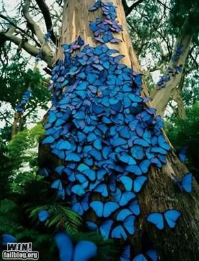 Butterfly WIN