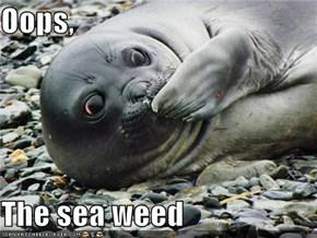 Oops,  The sea weed