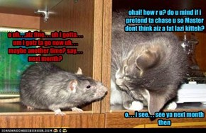 Cat + Mouse = ?