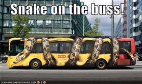 Snake on the buss!