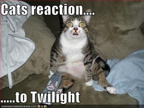 Cats reaction....  .....to Twilight