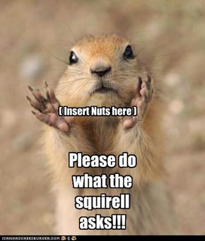 ( Insert Nuts here )