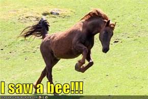 I saw a bee!!!