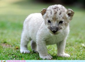 OH MY SQUEE BABY LION
