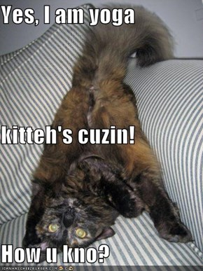 Yes, I am yoga kitteh's cuzin! How u kno?
