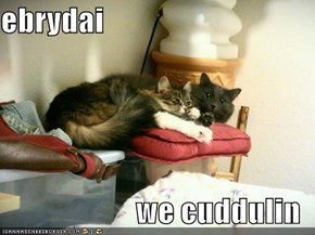 ebrydai  we cuddulin