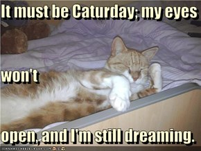 It must be Caturday; my eyes  won't open, and I'm still dreaming.
