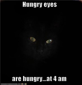 Hungry eyes  are hungry...at 4 am