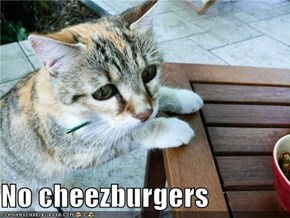No cheezburgers