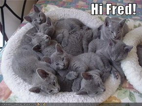 Hi Fred!