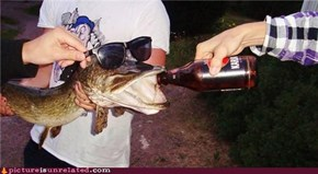 Fish Love Beer