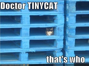 Doctor TINYCAT  that's who
