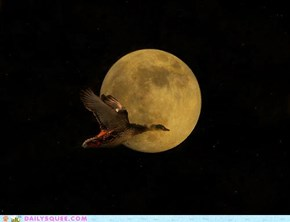 Acting Like Animals: Fly Me to the Moon